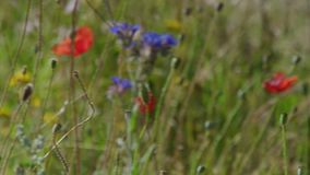 Beautiful flowers found in tall grass stock video video of flora beautiful flowers found in tall grass stock video video of flora tall 113901113 mightylinksfo