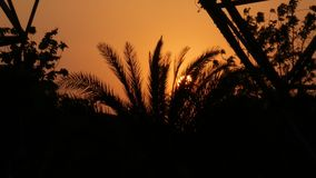 Sunset with palm trees stock video footage
