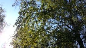 Video of sunshine through trees stock video