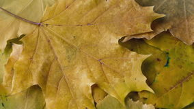 Video transition - are scattered autumn leaves stock video footage