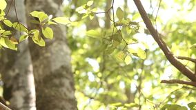 Tree leaves in a forest. Video of tree leaves in a forest stock video footage