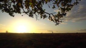 Tree nature landscape sunlight. Video of tree nature landscape sunlight stock video footage
