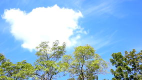 Video Tree top landscape with round big white cloud for copy space and text stock video footage