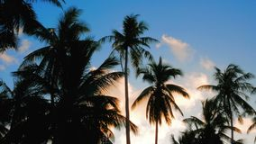 2 in 1 video. Tropical sunset sky with palm trees. Silhouette stock video footage