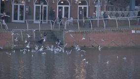 Two people feed seagulls by a river. Video of Two people feed seagulls by a river stock video footage