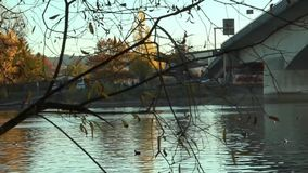 Video under the bridge on the River Rhine. Germany. Video under the bridge on the River Rhine stock video footage