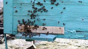 Video van bijenbijenkorf stock video