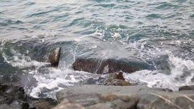 Video van de overzeese kust met de golven stock footage