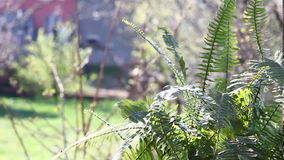 Video van groene Dryopteris-bladeren Stock Foto's