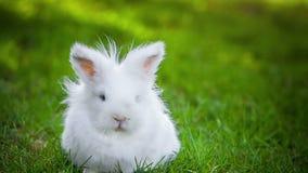 Video van wit konijn in openlucht stock videobeelden