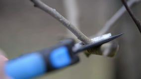 Video von den Niederlassungsausschnittscheren, die Zweig weg von einem Baum schneiden stock video