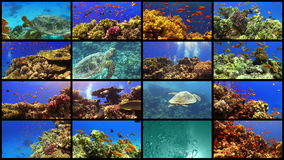 Video Wall Tropical Fish on Vibrant Coral Reef. 4K 16 screens static stock footage