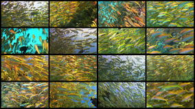 Video Wall Tropical Fish on Vibrant Coral Reef. 4K 16 screens static stock video footage