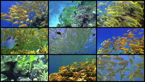 Video Wall Tropical Fish on Vibrant Coral Reef. 4K 9 screens static stock video footage