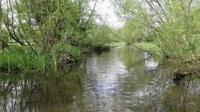 The beautiful River Chess at Chorleywood stock video