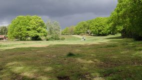 Woman walking across Chorleywood Common with pram and two dogs stock footage
