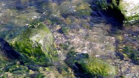 Video of water flowing through algae covered rocks. stock video
