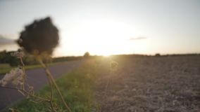 Wild flower with sunset in the background. Video of Wild flower with sunset in the background stock video footage
