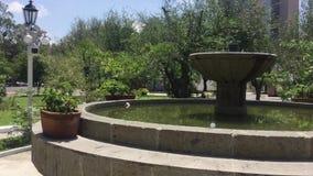 Quiet and beautful park stock video