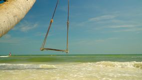 Big swung shake on a palm tree against the background of the blue ocean. Sunny day on the island in Vietnam. On this video you can see as on the bank of the stock video footage