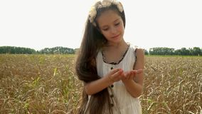 The beautiful dark-haired girl considers wheat seeds. The little beautiful girl costs in the Russian field of mature stock footage