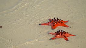 Two big red stars lie N and white sand. Sea waves wash starfishes. Beautiful slow-motion shot. Closeup if a Red starfish. On this video you can see as on the stock footage