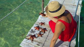 The woman in a red dress sits on a pier and considers red starfishes. Red starfish. closeup. On this video you can see as the woman considers red starfishes at stock video footage