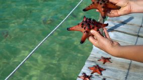 The woman in a red dress on a pier also considers red. Red starfish. closeup. On this video you can see as the woman considers red starfishes at transparent blue stock footage