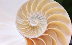 Videoclip de la cantidad de la acci?n de la c?scara del nautilus que da vuelta al fondo natural del ratio de oro de Fibonacci almacen de video