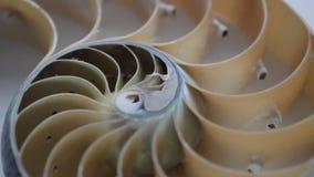 Videoclip de la cantidad de la acci?n de la c?scara del nautilus que da vuelta al fondo natural del ratio de oro de Fibonacci almacen de metraje de vídeo