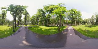 videoeekhoorn 360 in het park stock video