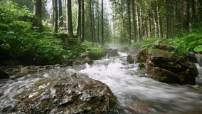 Videoen av strömmen som över flödar, vaggar i skog arkivfilmer