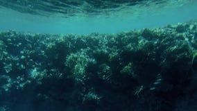 videoen 4k gjorde fr?n ub?ten av h?rliga undervattens- landskap Korallrev och simma tropiska fiskar arkivfilmer