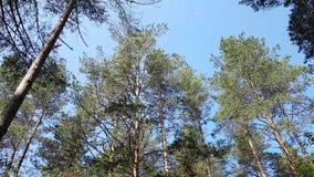 Videoen visar det miljö- problemet - mot bakgrunden av härliga kronor av träd, ljus saftig lövverk