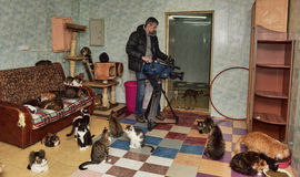 Videographer shoots for television in the cat shelter Royalty Free Stock Images