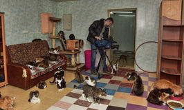 Videographer shoots for television in the cat shelter Stock Photos