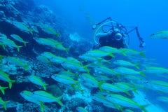 Videographer subacqueo Fotografie Stock Libere da Diritti