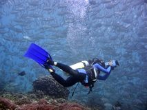 Videographer subaquático fotografia de stock royalty free