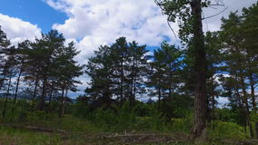Videography of the summer forest from the window of a moving car or a train. The camera moves past trees, bushes, and pine trees. stock video
