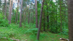 Videography of the summer forest from the window of a moving car or a train. The camera moves past trees, bushes, and pine trees. stock video footage