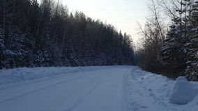 Videography winter forest road covered with snow. Camera moves slowly over the road by trees, shrubs, pine trees covered with snow stock footage