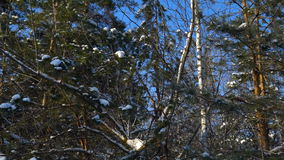 Videography winter forest from the window of a moving car or train. Сamera moves past the trees, shrubs, pine trees covered with stock video footage