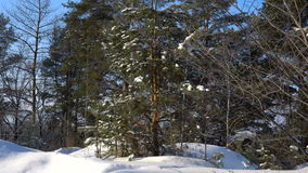 Videography winter forest from the window of a moving car or train. Сamera moves past the trees, shrubs, pine trees covered with stock footage