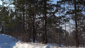 Videography winter forest from the window of a moving car or train. Сamera moves past the trees, shrubs, pine trees covered with stock video