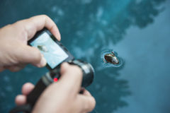 Videoing swimming water beetle Stock Photography