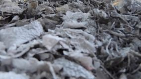 Videolengte, Brandende huisvuil en rook De sterke wind neemt giftige rook van het branden van huisvuil in de lucht toe en spreidt stock video