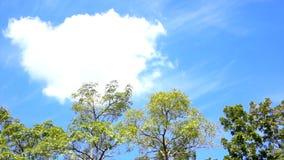 Videopn trädöverkantlandskap med det runda stora vita molnet för kopieringsutrymme och text lager videofilmer
