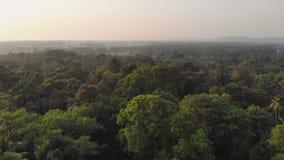Videopp t?ta skogmassiver f?r surr inom staden av Margao i tillst?ndet av Goa india lager videofilmer