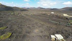 Videoripresa aerea della vigna di Geria della La su suolo vulcanico nero a Lanzarote, isole Canarie video d archivio