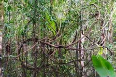 Vides de la selva foto de archivo libre de regalías
